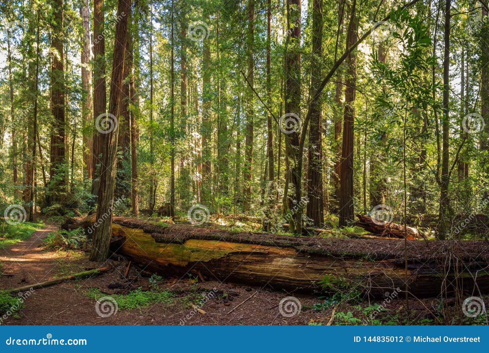 Мирная роща Redwood