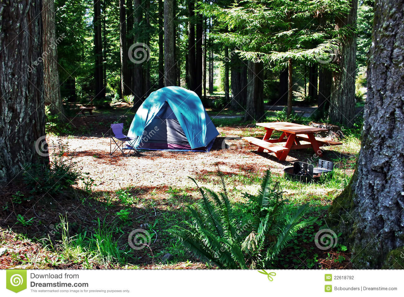 Redwood Tent Campsite Stock Photo Image Of Picnic Chair