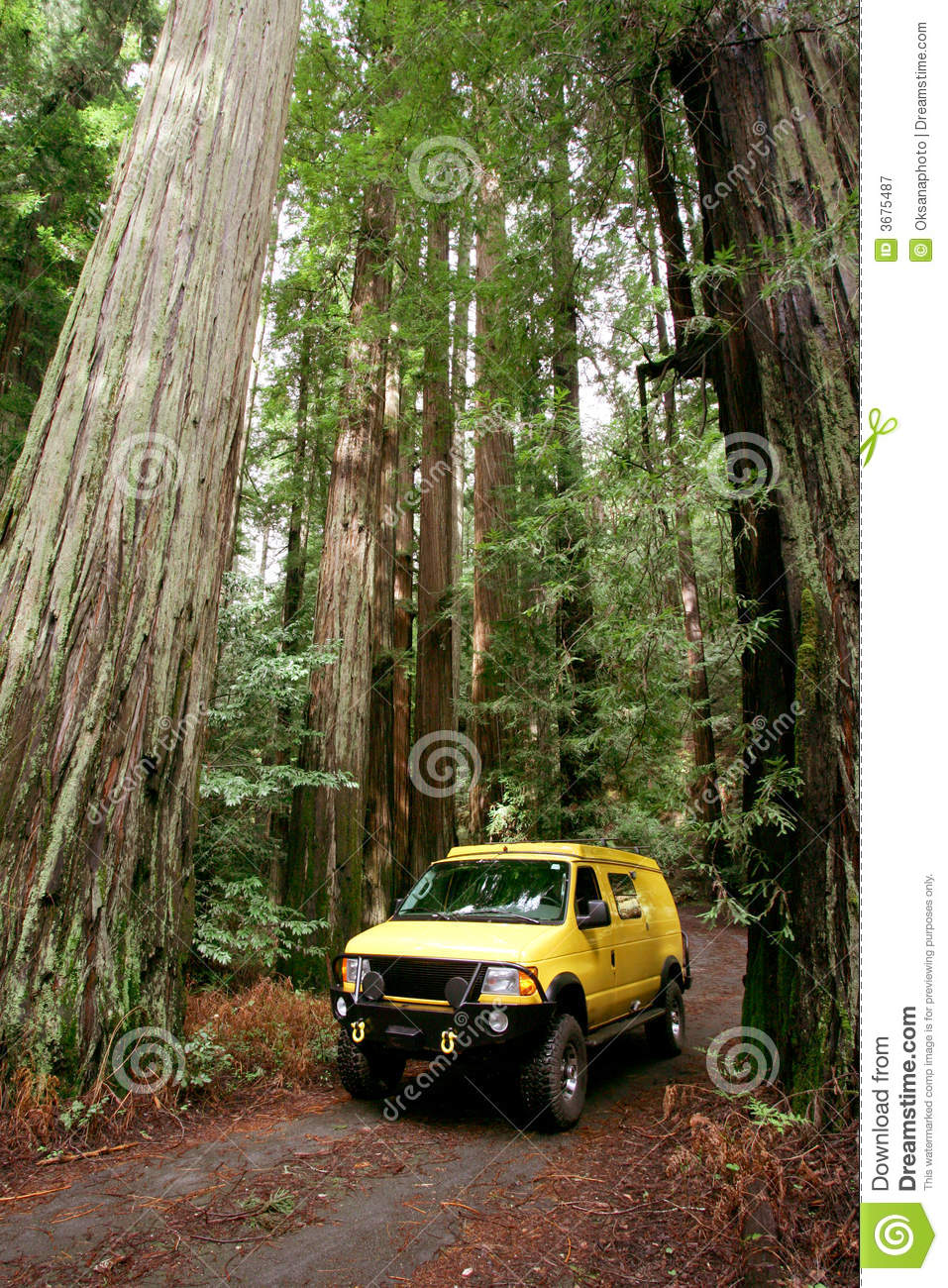 Download Redwoods immagine stock. Immagine di redwoods, furgone - 3675487
