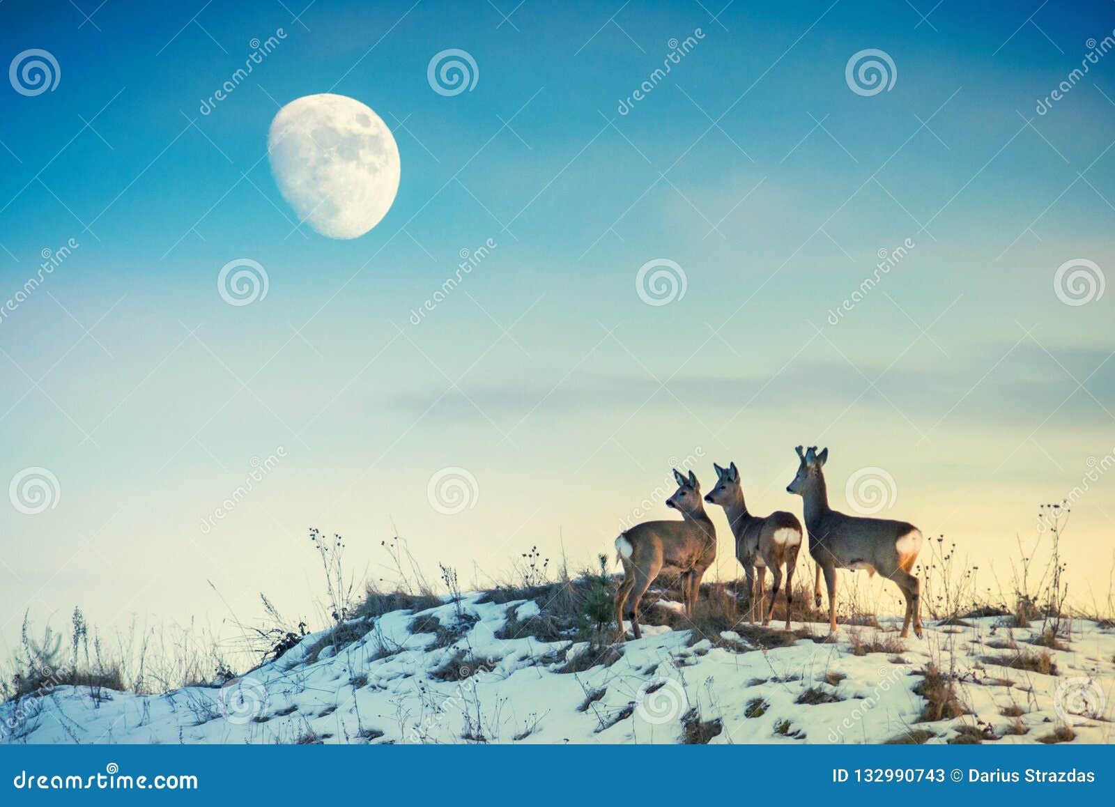 Reeën op een heuvel die aan maan kijken