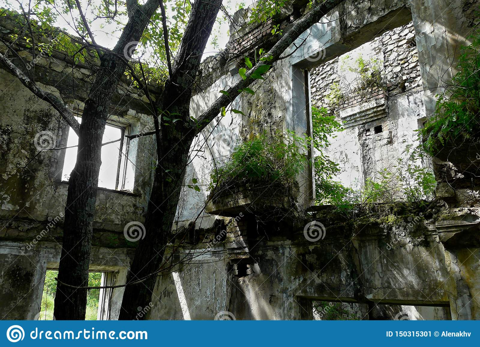 Ree and bushes sprouted inside an abandoned dilapidated building