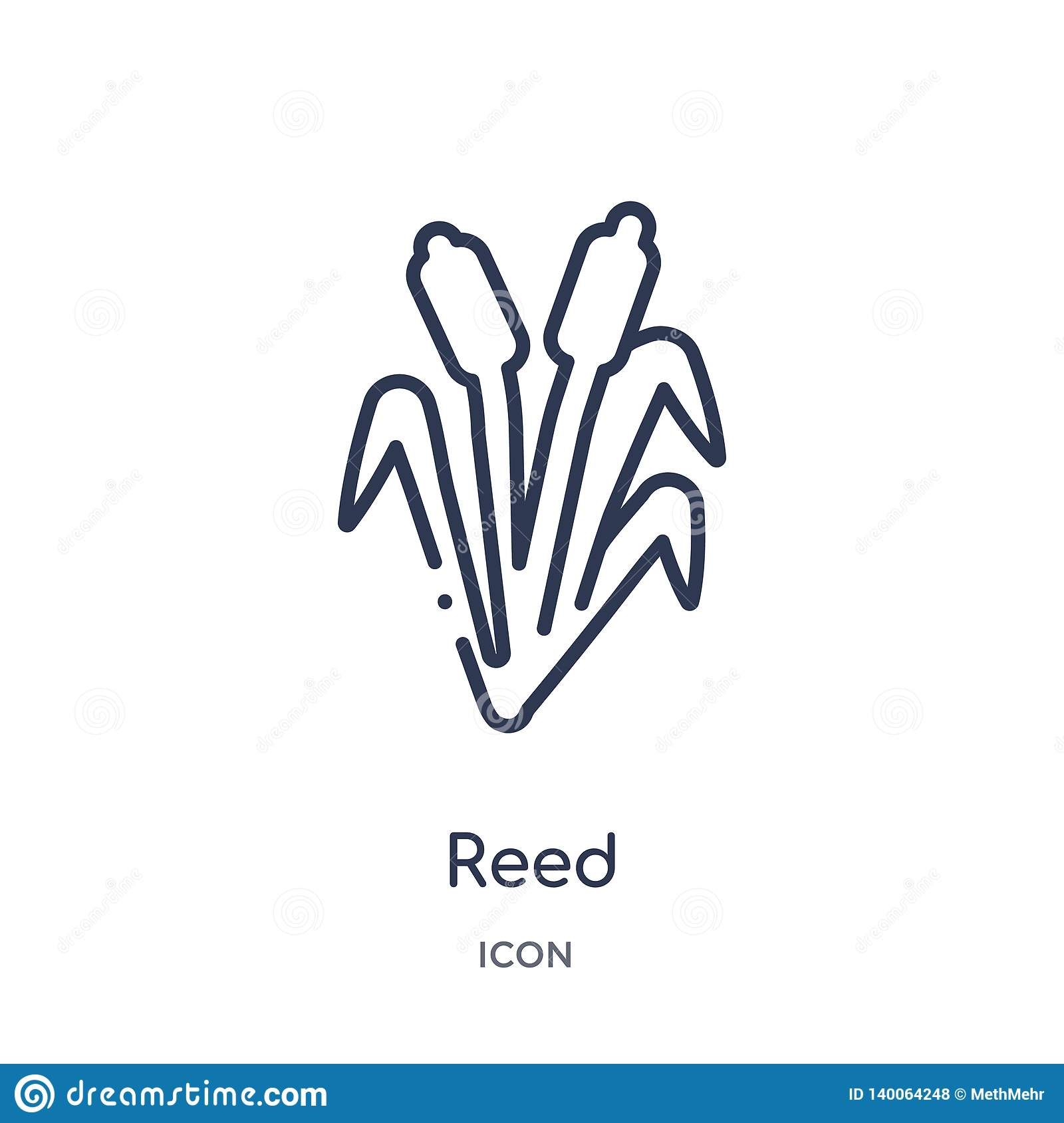 Reed Icon From Nature Outline Collection  Thin Line Reed
