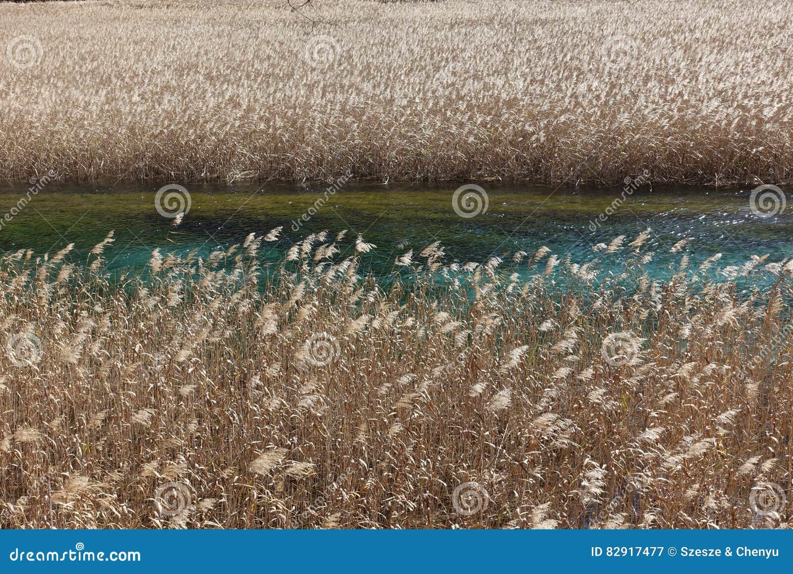 Reed Lake in Hemelse Jiuzhaigou