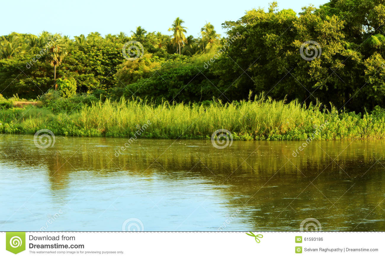Reed plants and river