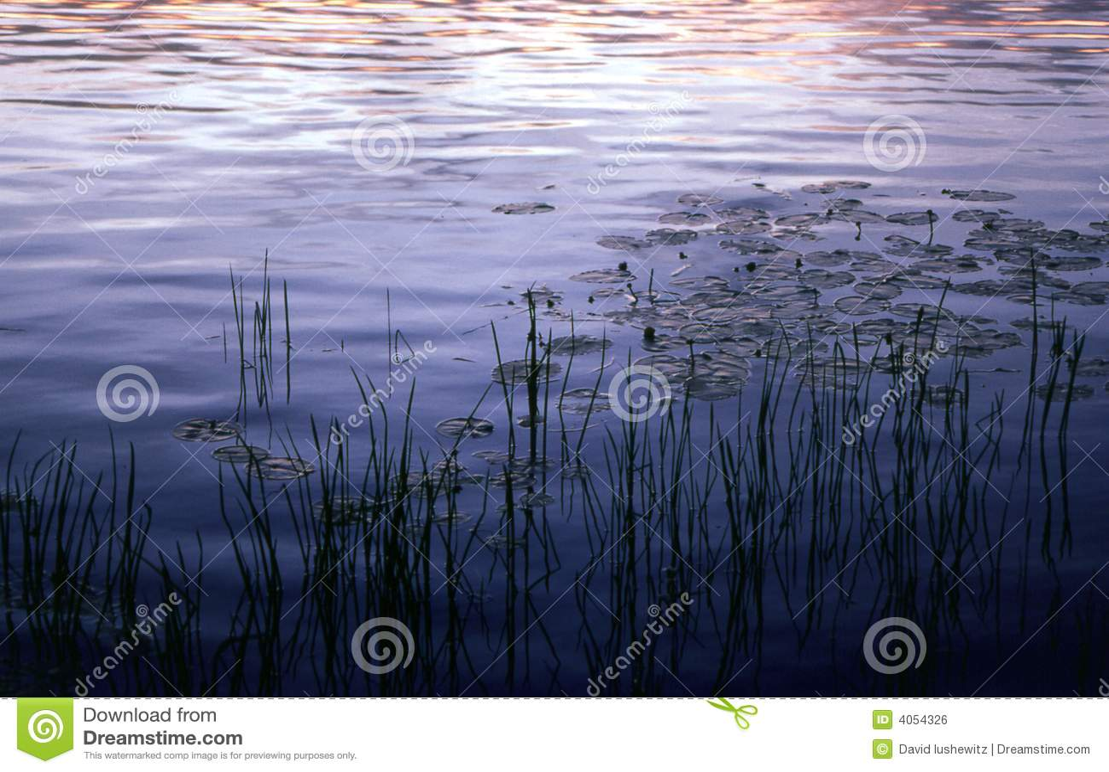 Reed, zachód słońca