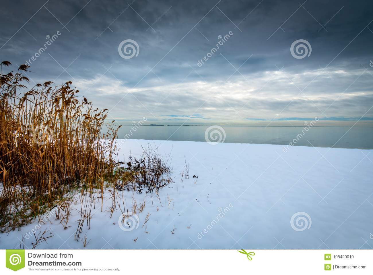 Reeds on a snowy shoreline.