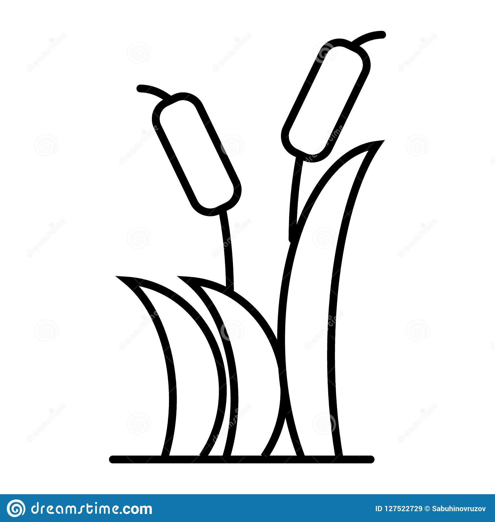 reeds thin line icon cattail vector illustration isolated on white