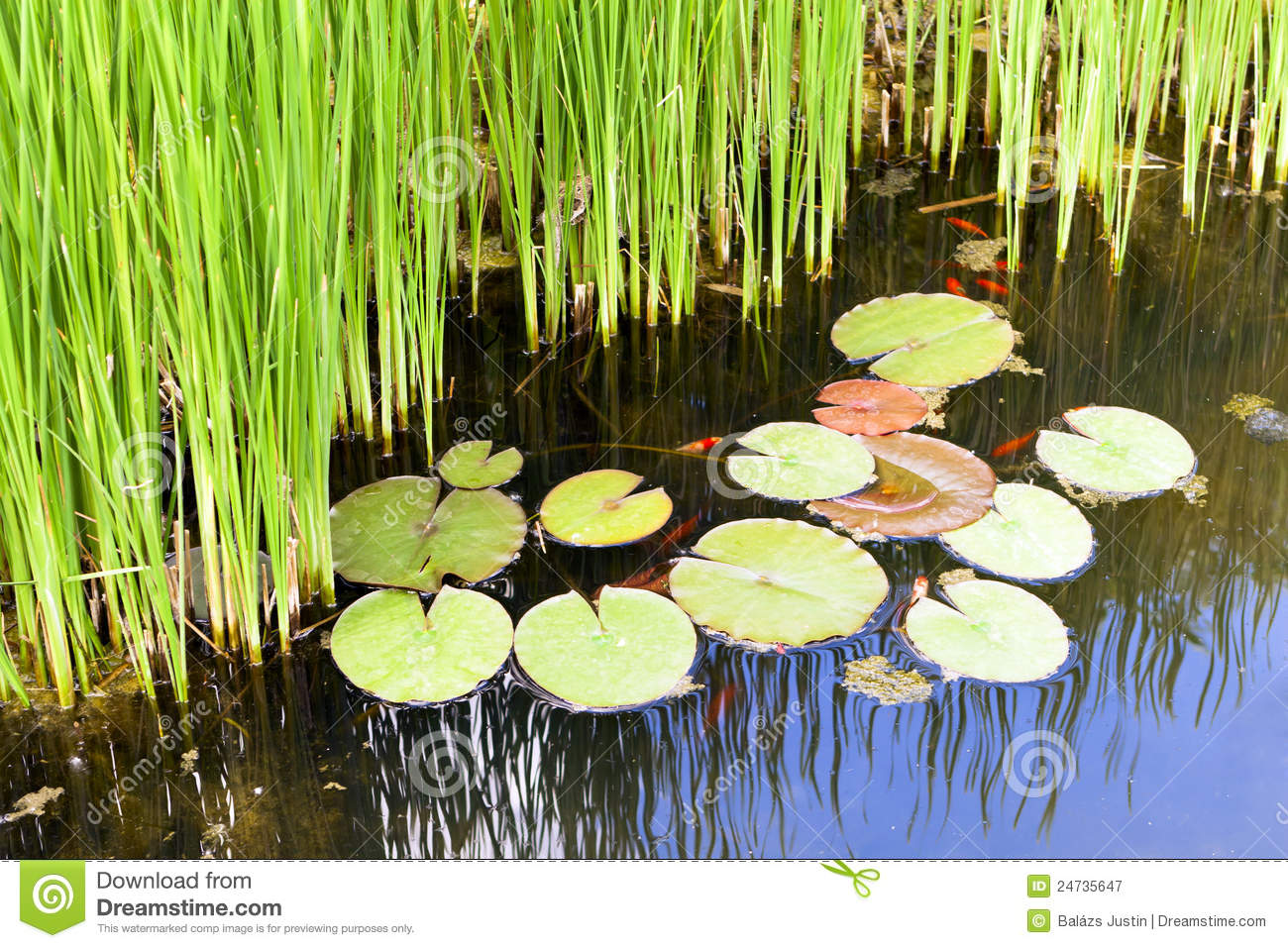 reeds and water lilies in the garden pond royalty free cattail clipart pinterest cattail clipart pinterest