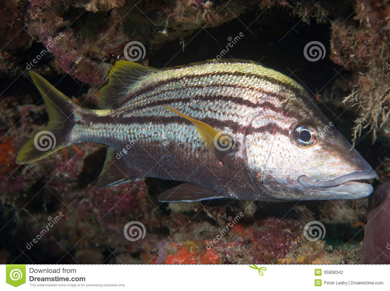 On a reef in the atlantic ocean stock photo image 35908342 for Fish in spanish