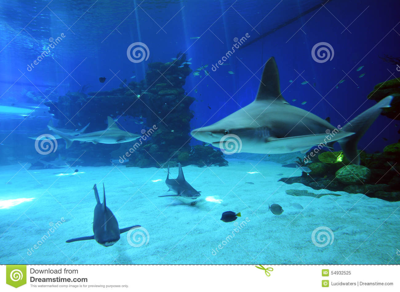 sharks swim in the Shark Pool of Coral World Underwater Observatory ...