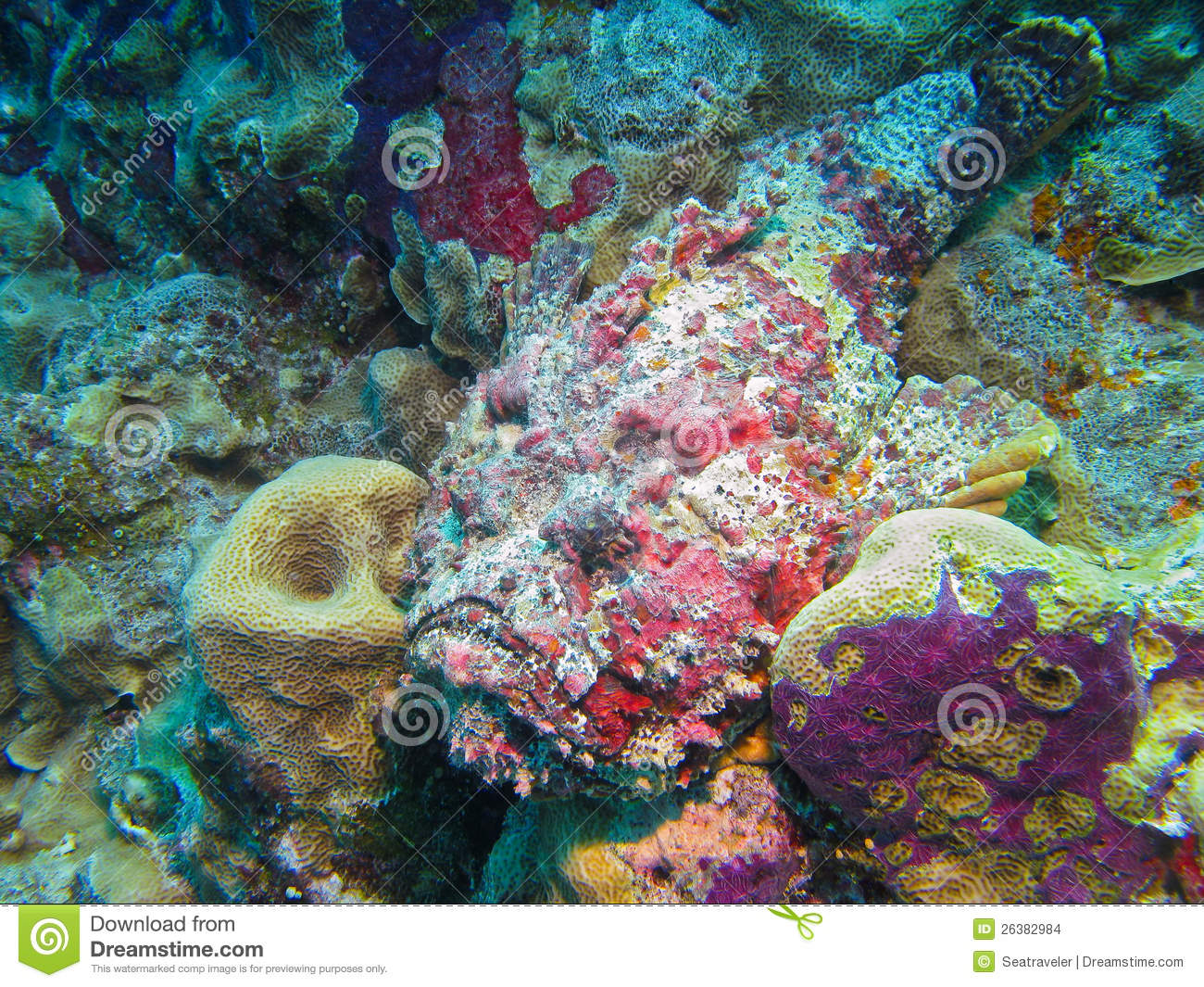 Reef stonefish great barrier reef australia stock photo for Stone fish facts