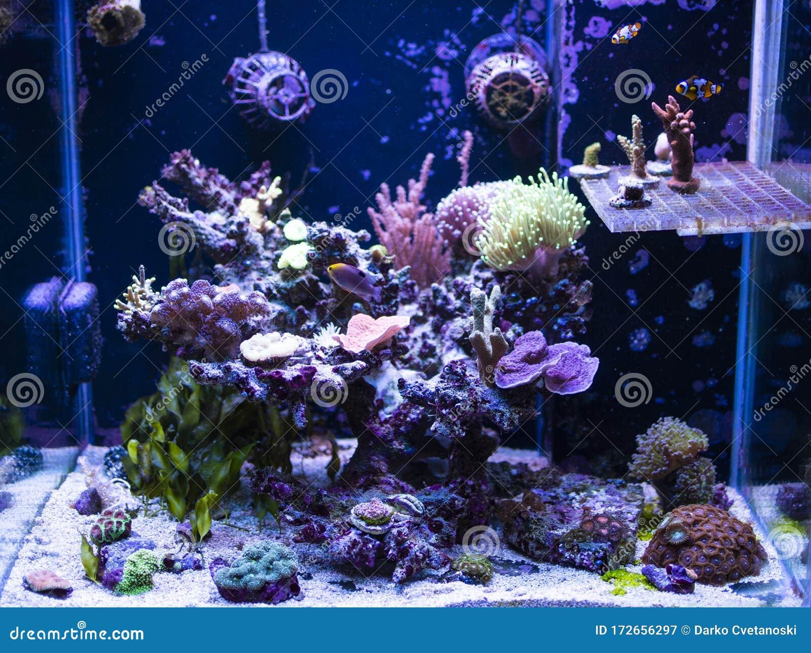 Reef Tank, Marine Aquarium. With Different Types Of Corals ...