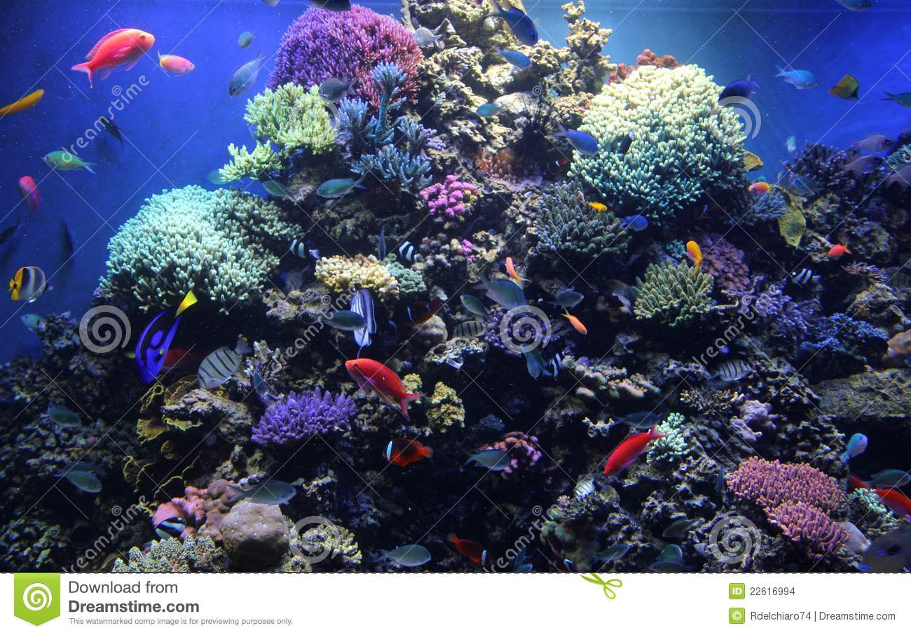 Reef Tank Monterey Bay Aquarium Stock Photo Image 22616994