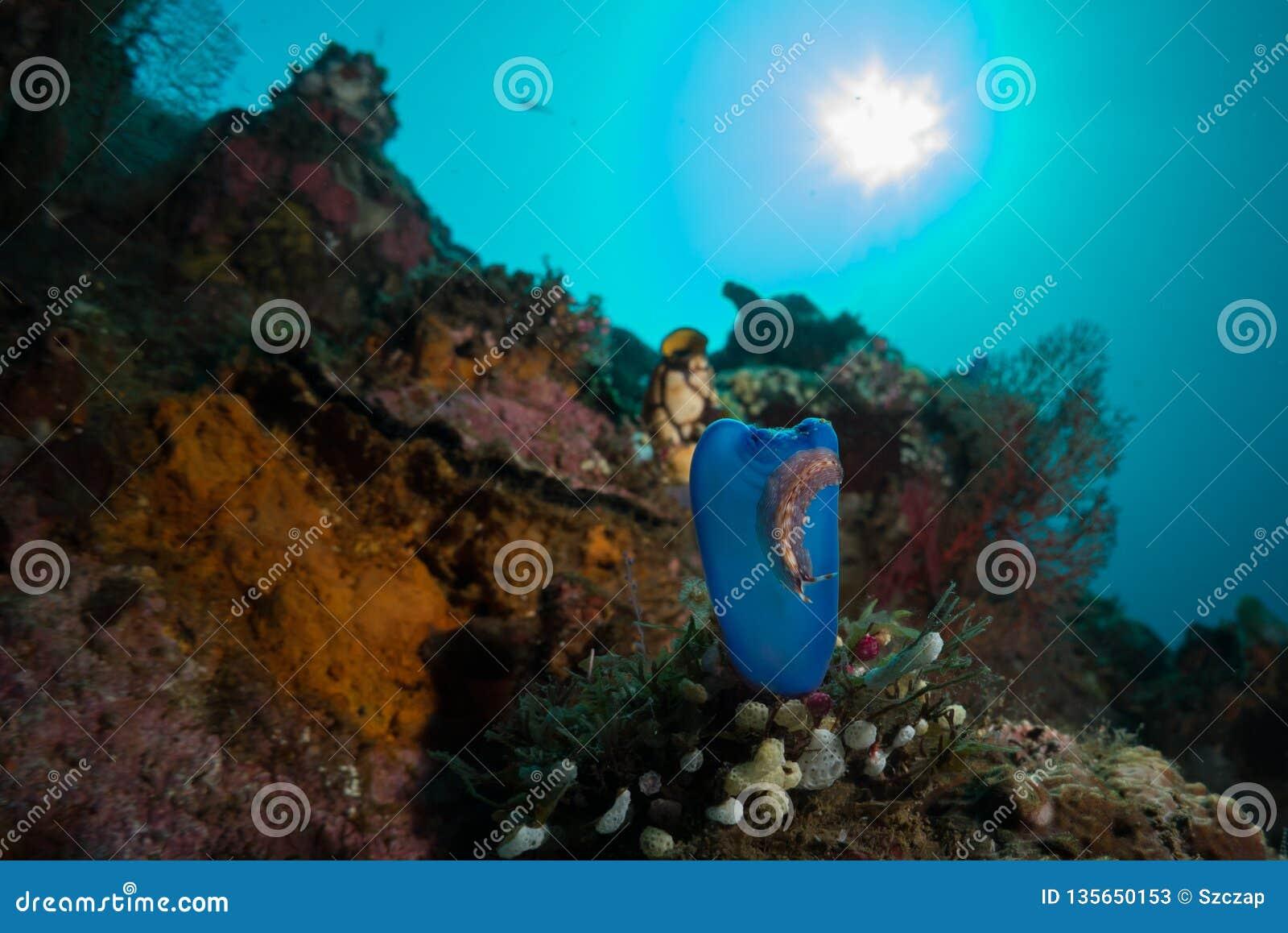 Reefscape με μπλε χιτωνοφόρες