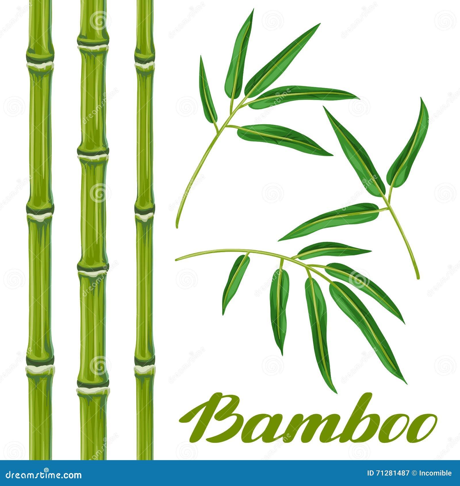Reeks bamboeinstallaties en bladeren voorwerpen voor decoratie ontwerp bij de reclame van - Decoratie murale ontwerp salon ...