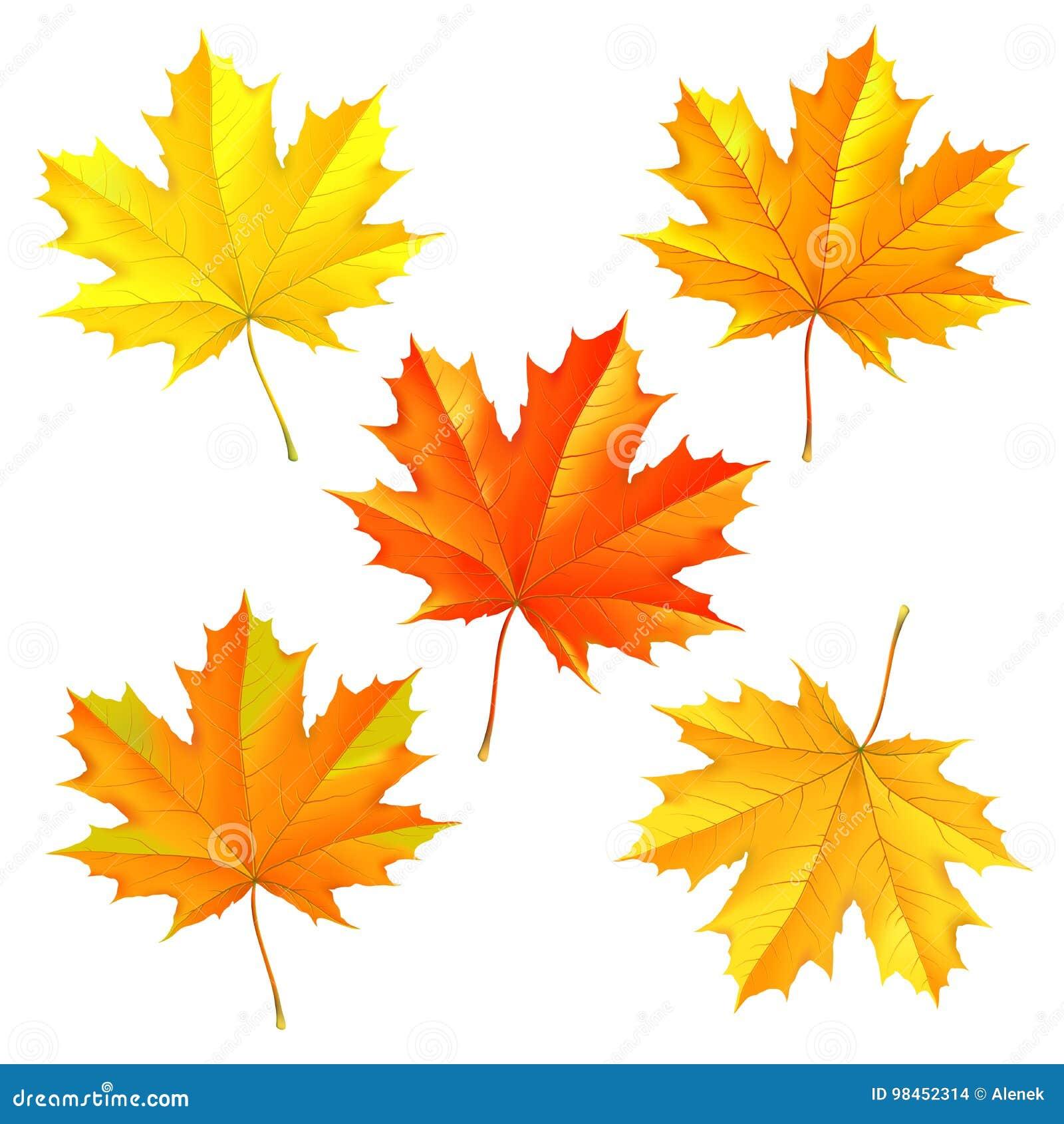 Reeks de herfst gevallen bladeren