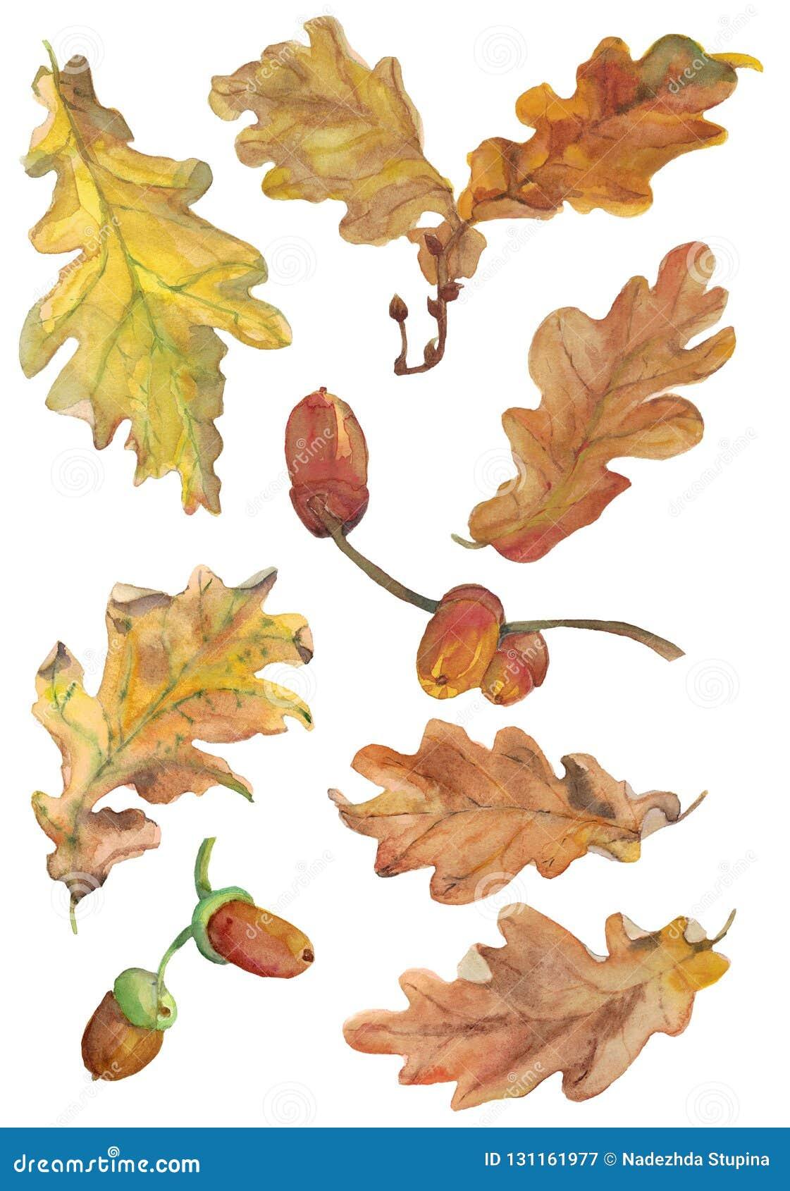 Reeks hand getrokken aqwarelle de herfst eiken bladeren en eikels