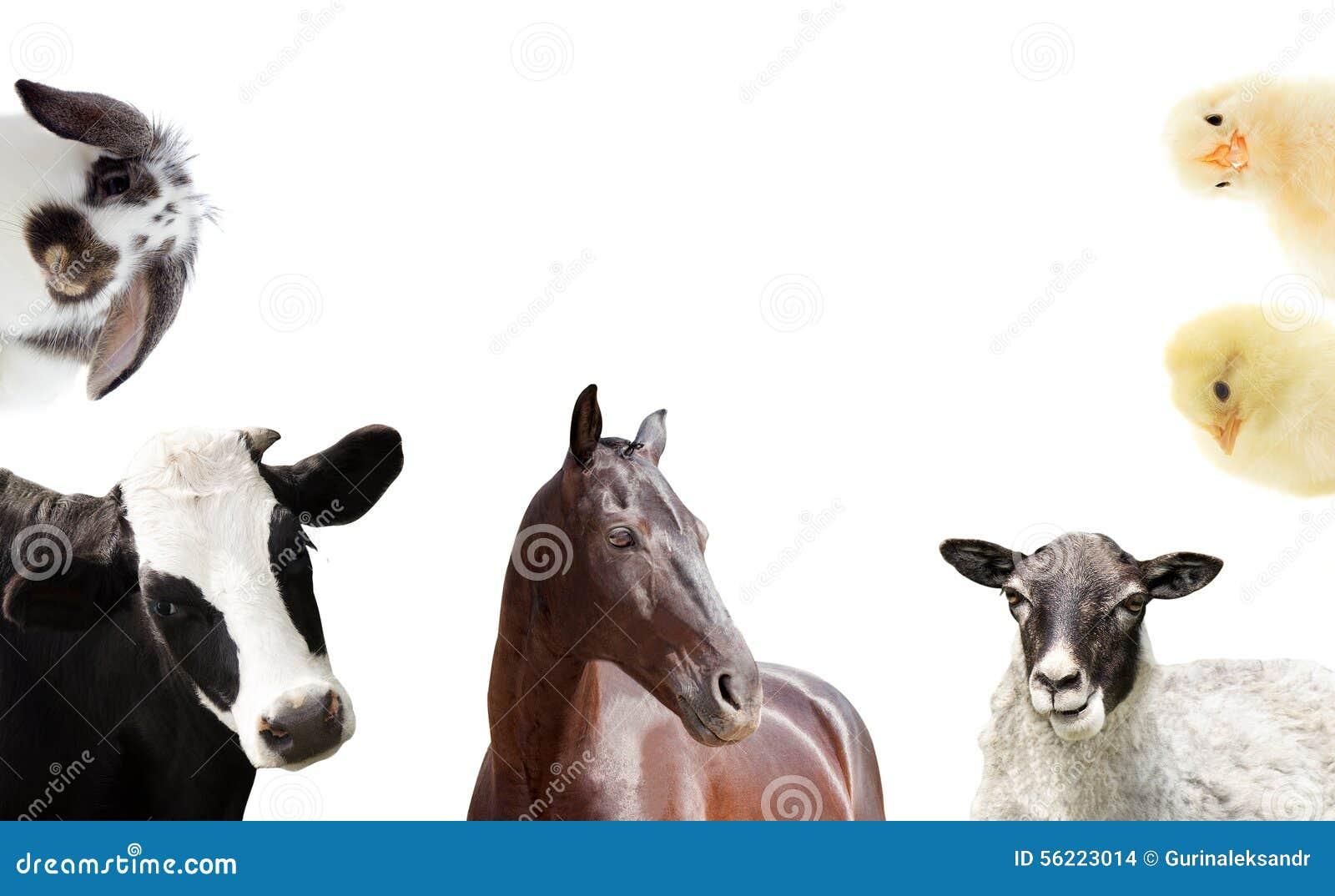 Reeks landbouwbedrijfdieren
