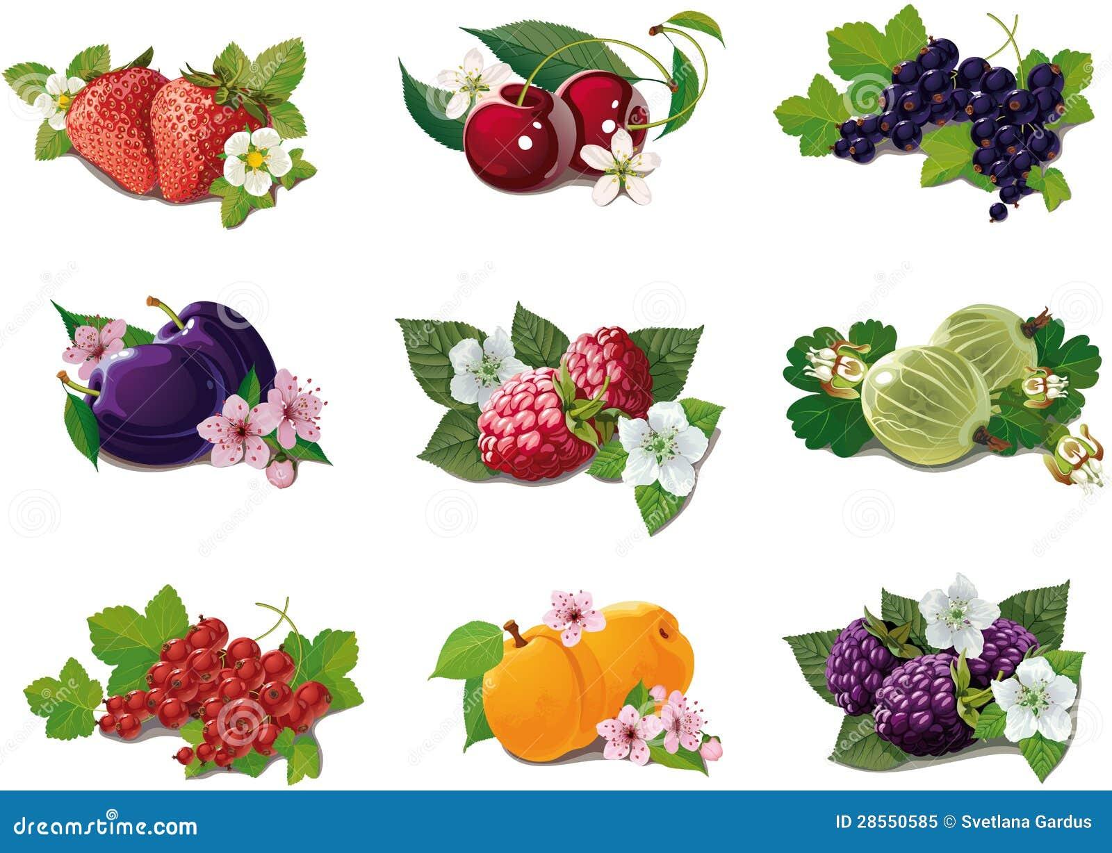Reeks rijpe vruchten
