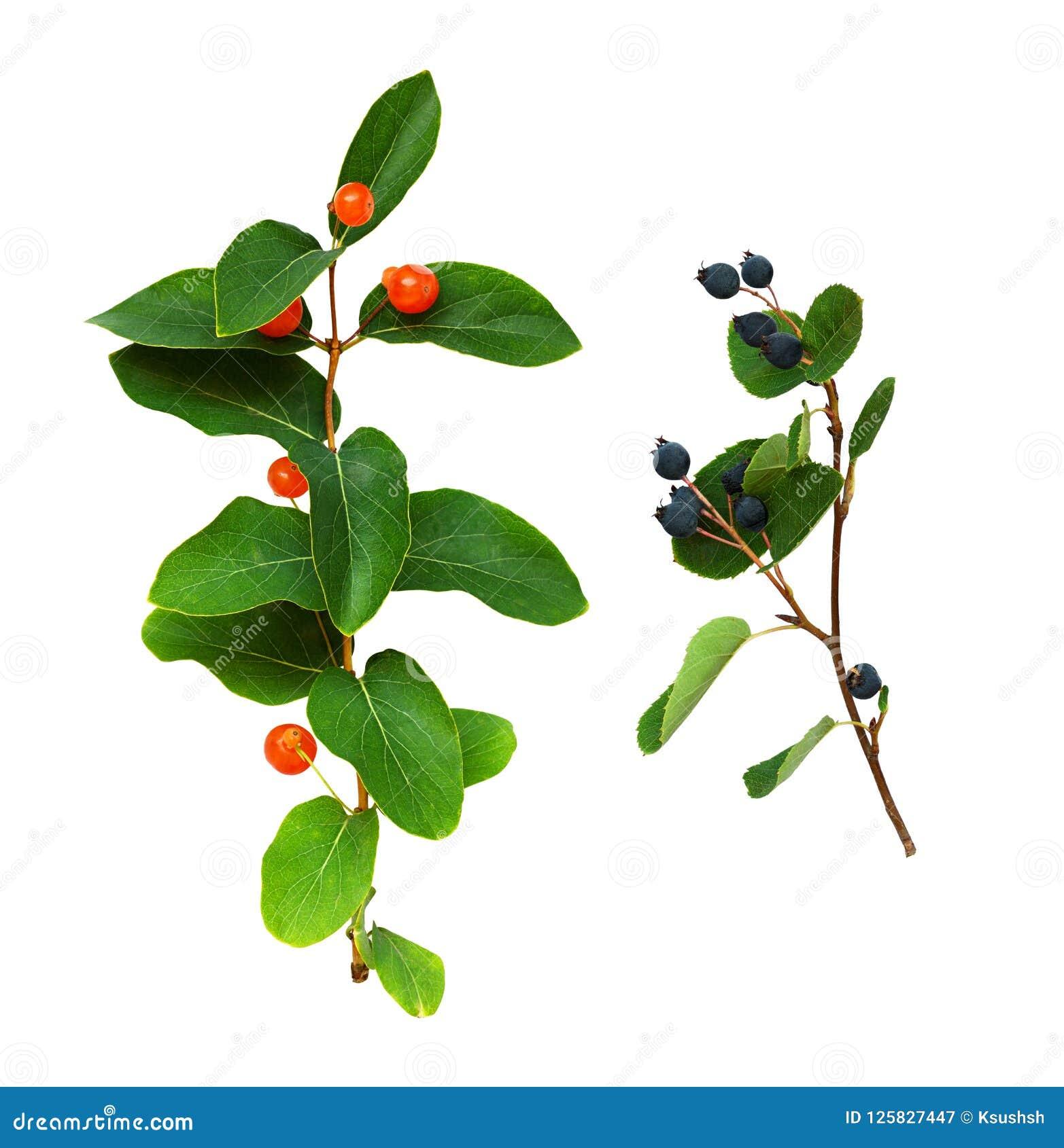 Reeks takjes met groene bladeren en rode en blauwe bessen