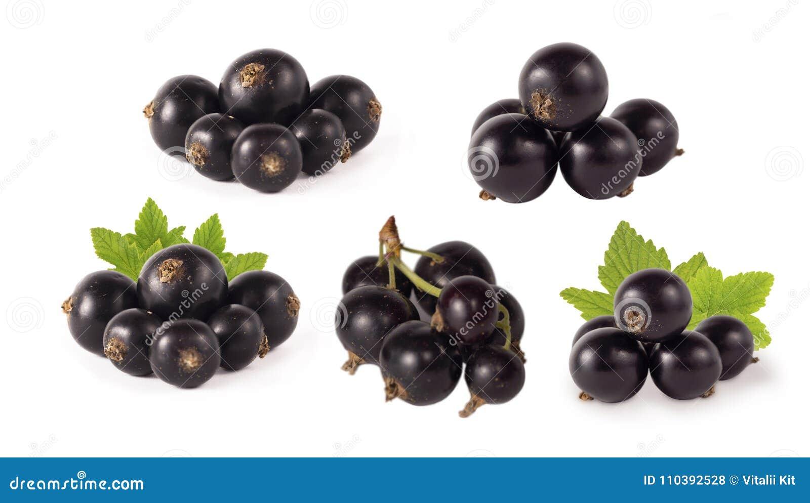 Reeks van blackcurrant op wit wordt geïsoleerd dat Rijpe en smakelijke zwarte bes met exemplaarruimte voor tekst Bessen met blade