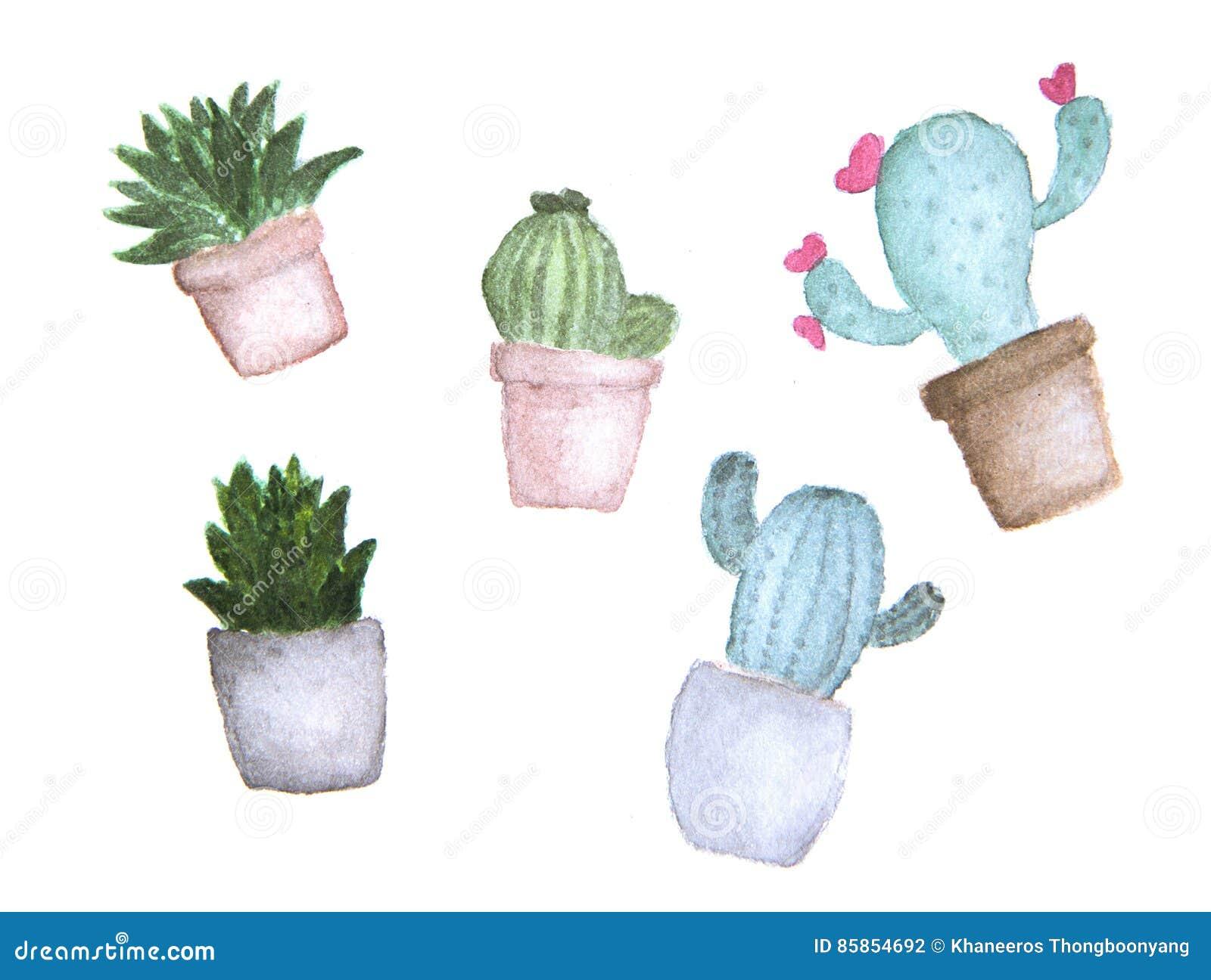Reeks van cactus in potten tropische tuin