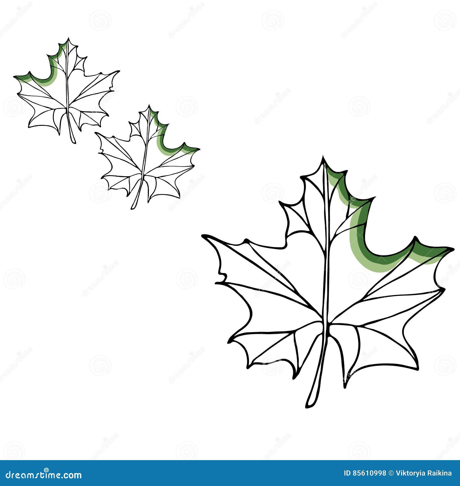 Reeks van de blad de vectortekening Geïsoleerde boombladeren Kruiden gegraveerde stijlillustratie Biologisch productschets Getrok