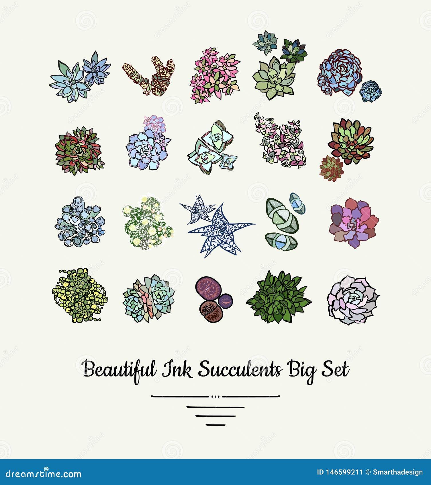 Reeks van de Succulents de vector geïsoleerde hand getrokken illustratie Het moderne embleem van inkt succulente installaties, pi