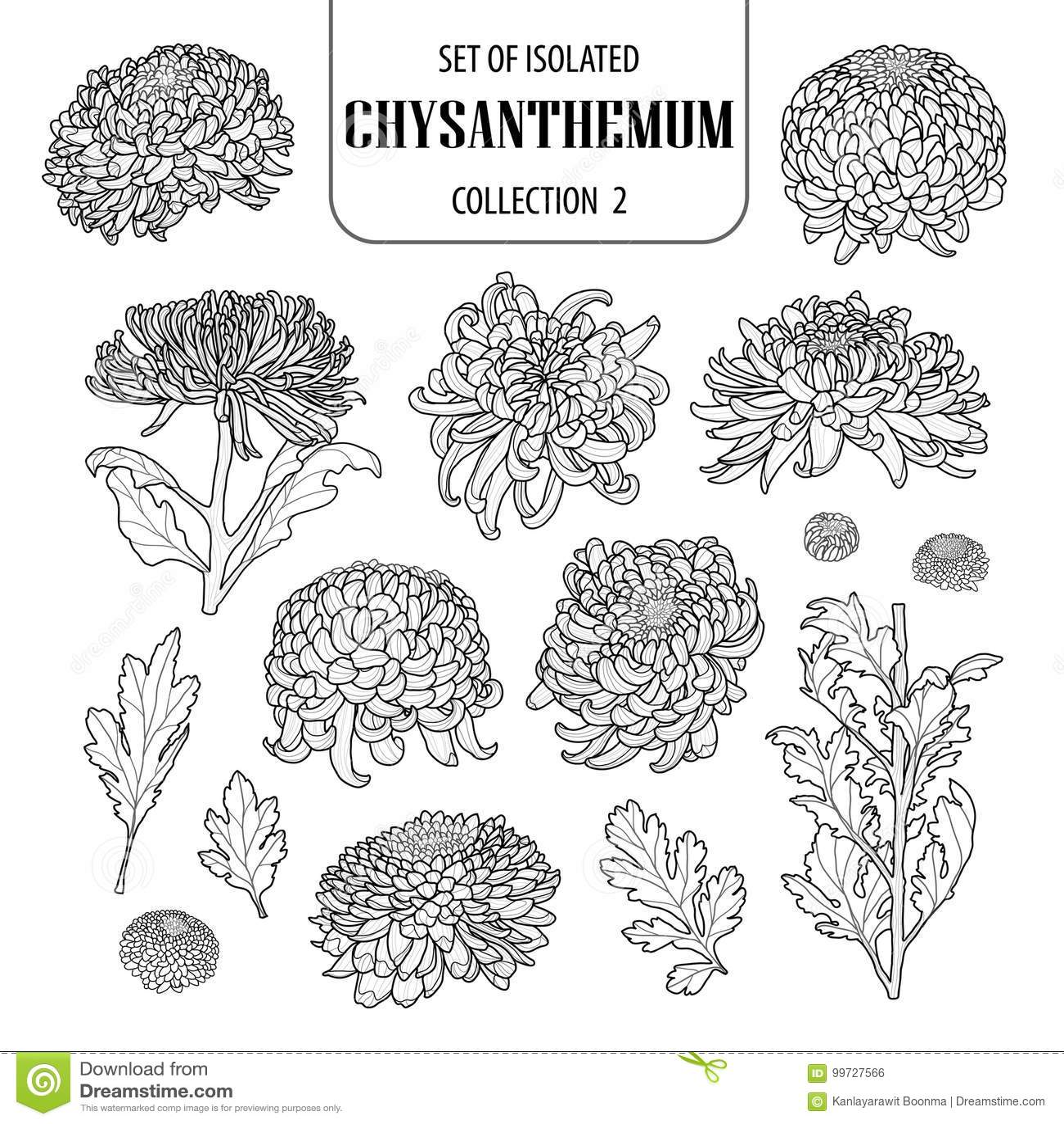 Reeks van geïsoleerde chrysanteninzameling 2 Leuke ter beschikking getrokken van de bloemillustratie stijl Zwart overzicht en wit