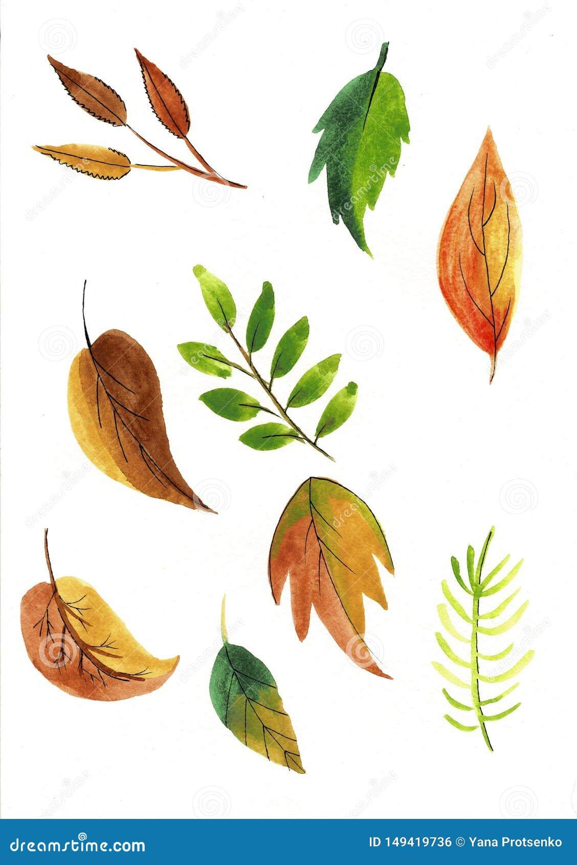 Reeks van kleurrijke de Waterverfillustratie van de herfstbladeren