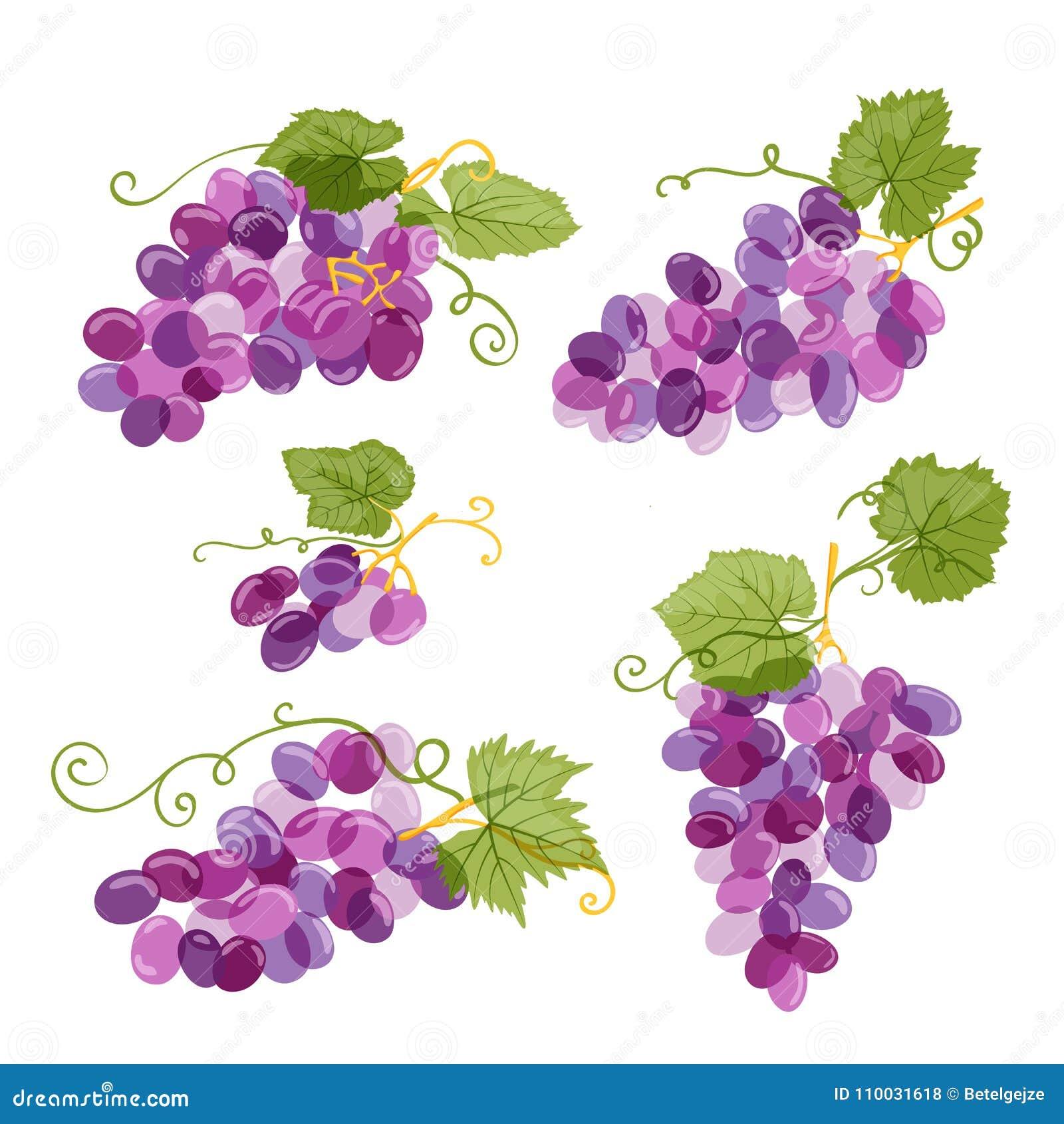Reeks van wijnstokillustratie op witte achtergrond wordt geïsoleerd die Verse hand getrokken druif met groene bladeren