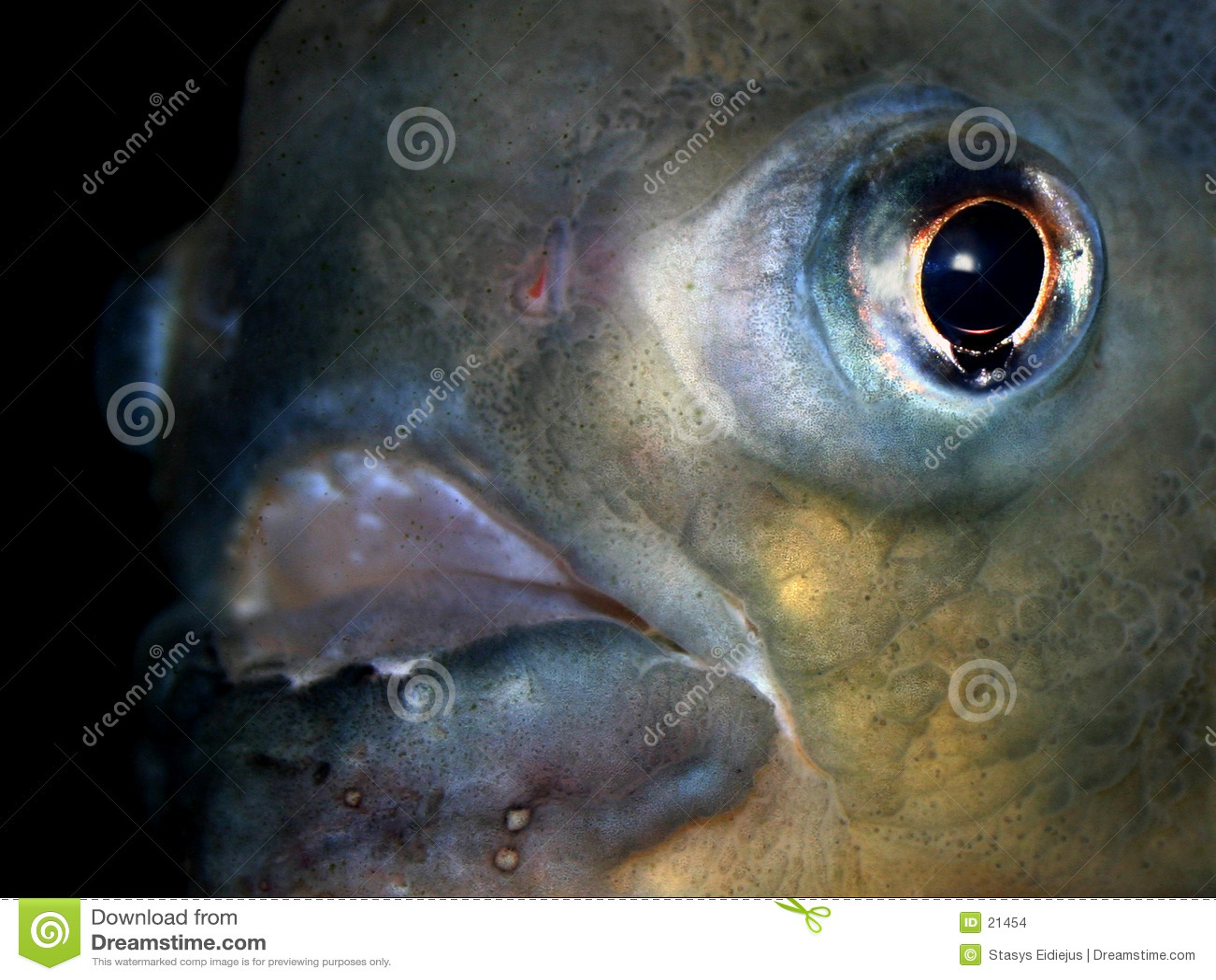 Reeks VII van vissen