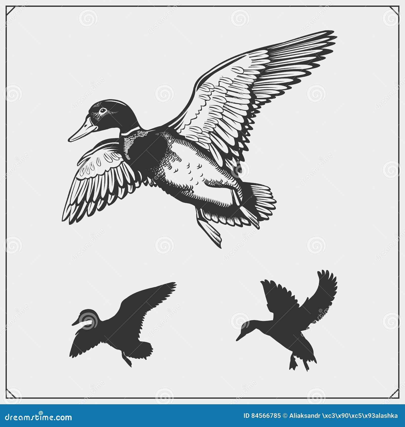 Reeks vliegende wilde eenden