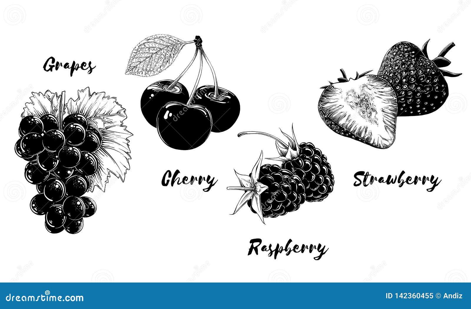 Reeks vruchten en bessen, die op witte achtergrond wordt geïsoleerd Hand-drawn elementen zoals druif, kers, aardbei en