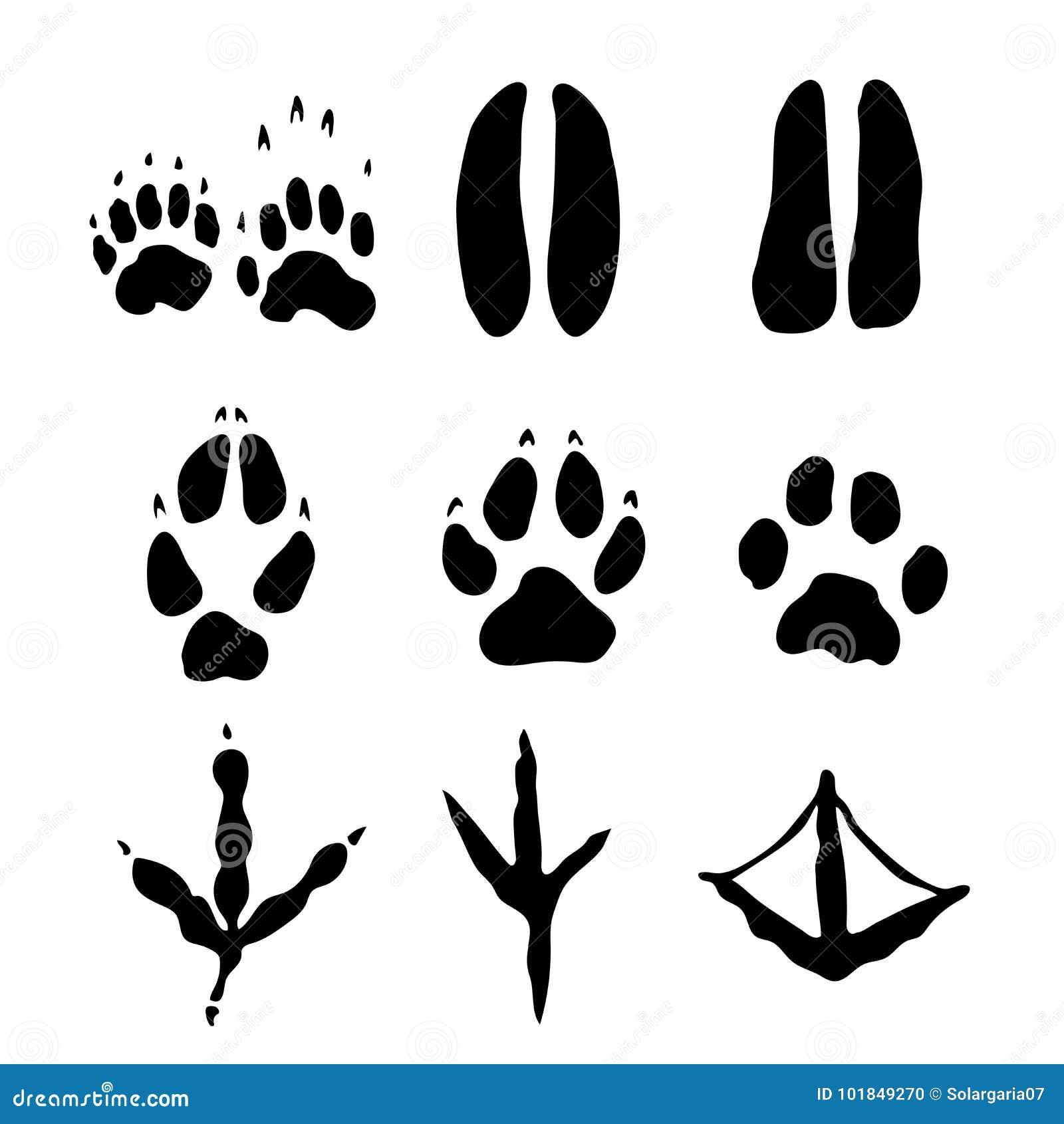 Reeks Zoogdieren en bodvoetafdrukken - Vectorillustratie