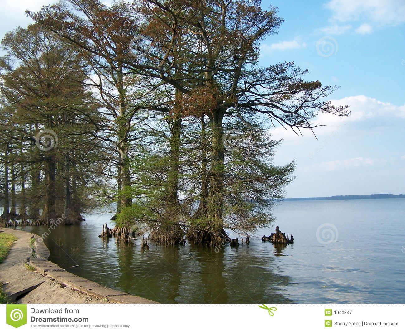 Reelfoot Lake stock image  Image of boating, fish, boat - 1040847