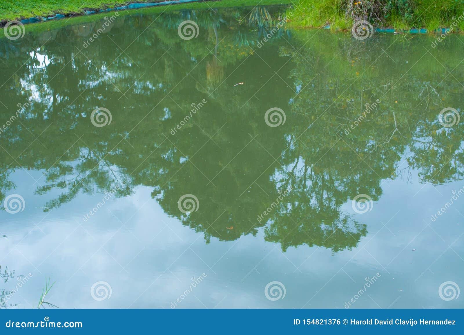 Refleje en el agua del lago