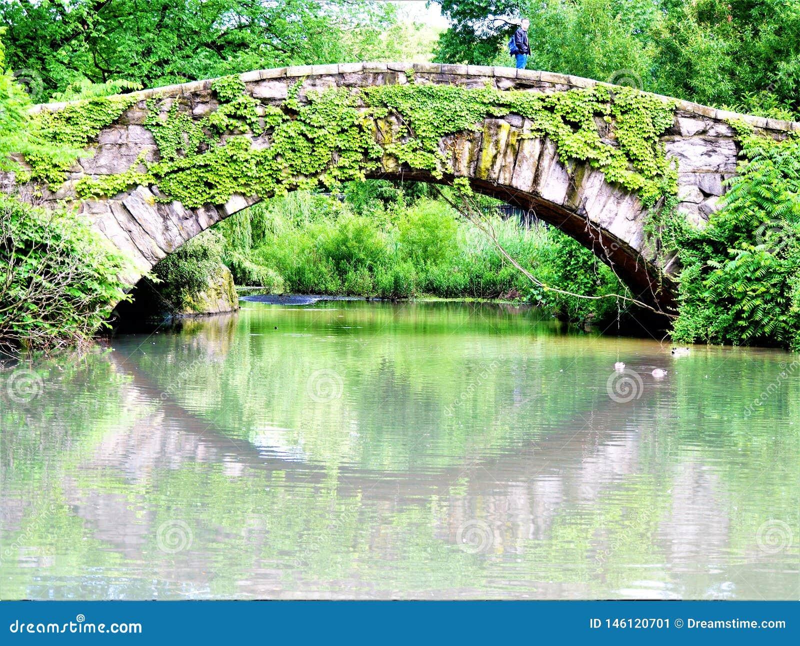 Reflekterande Ivy Covered Gapstow Bridge New York Central Park