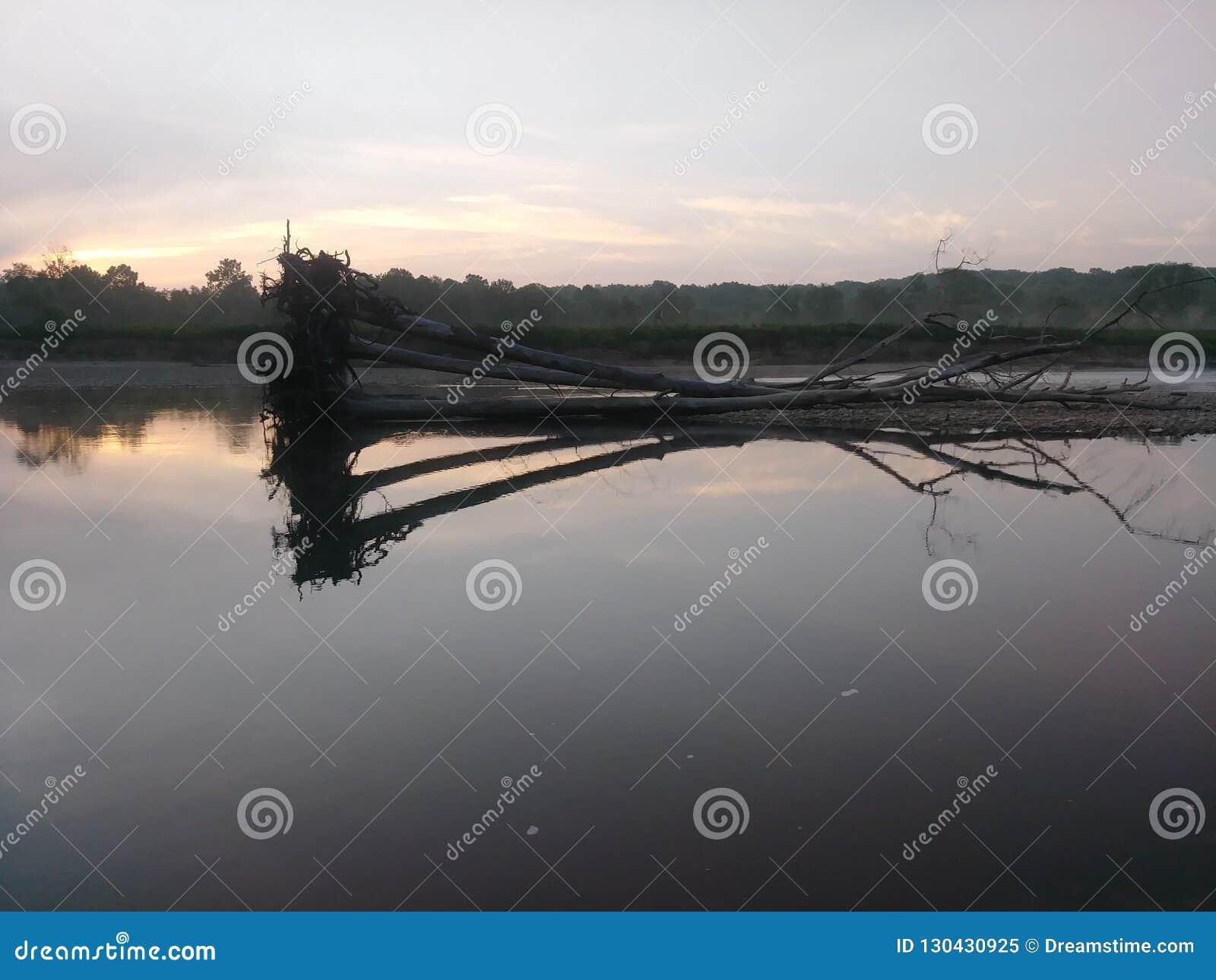 Reflexão da árvore de um rio nevoento