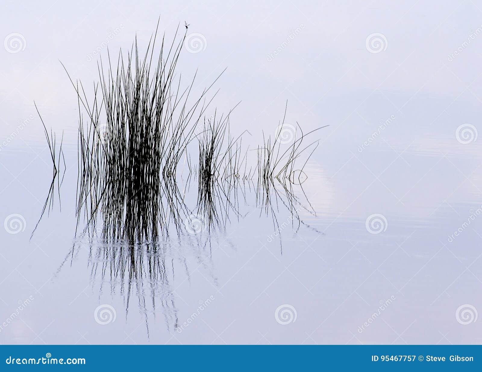 Reflexão da grama da lagoa