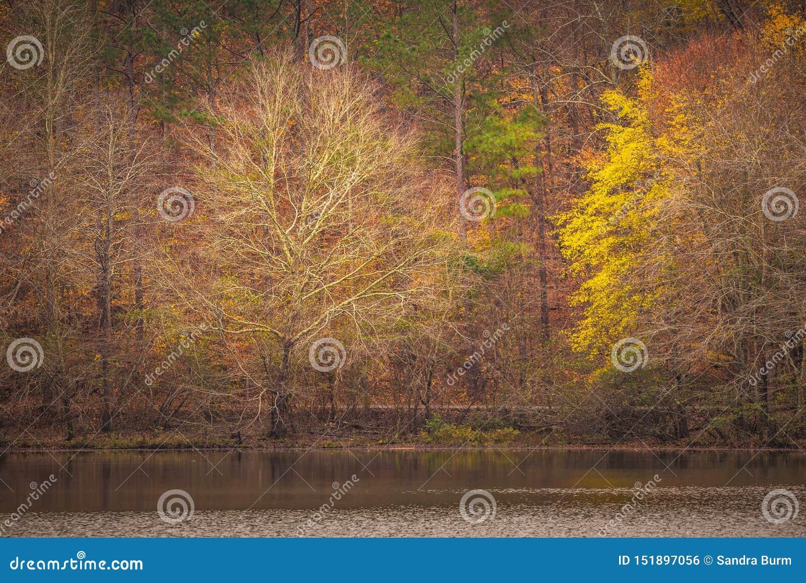 Reflexão do por do sol nas árvores no outono