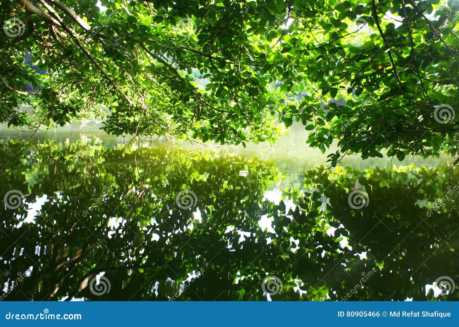 Reflexión de árboles en el lago tranquilo
