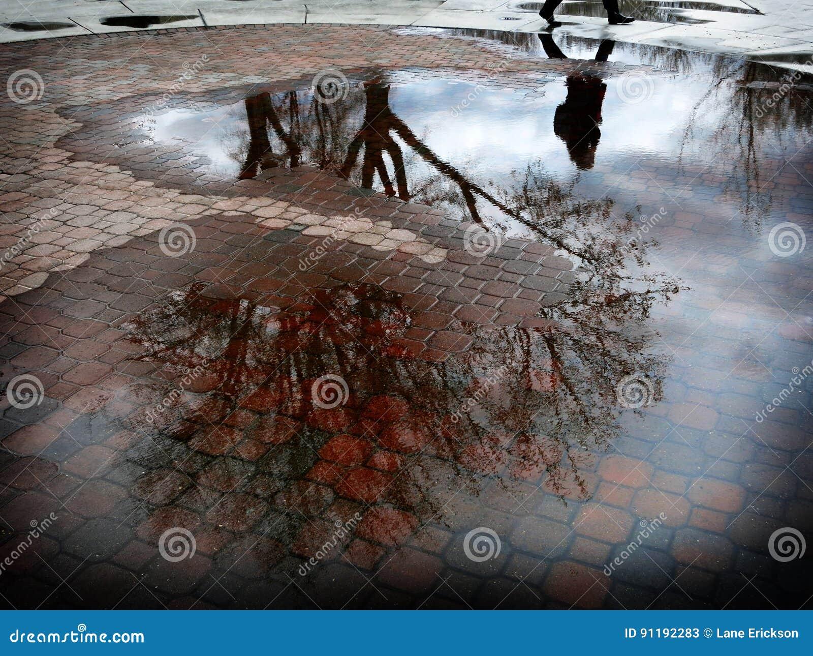 Reflexión del árbol en el charco del agua después de Sorm