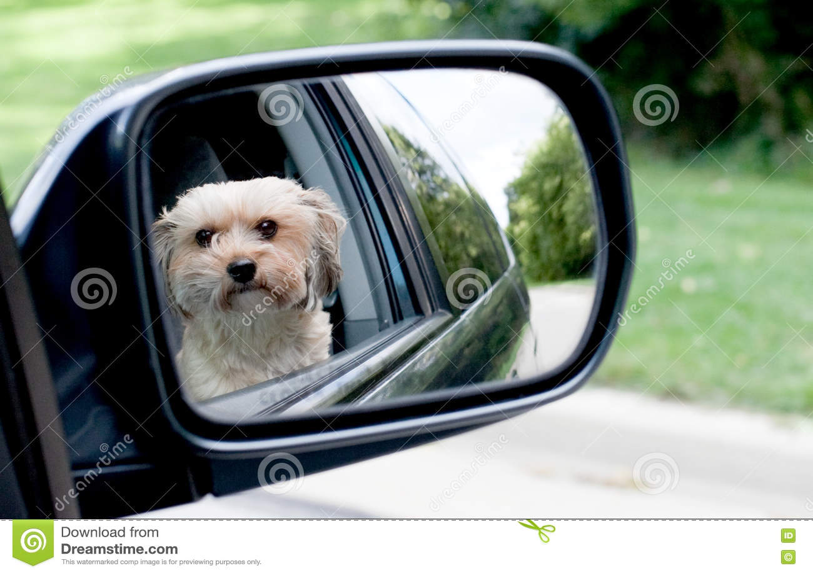 Reflexión del perro