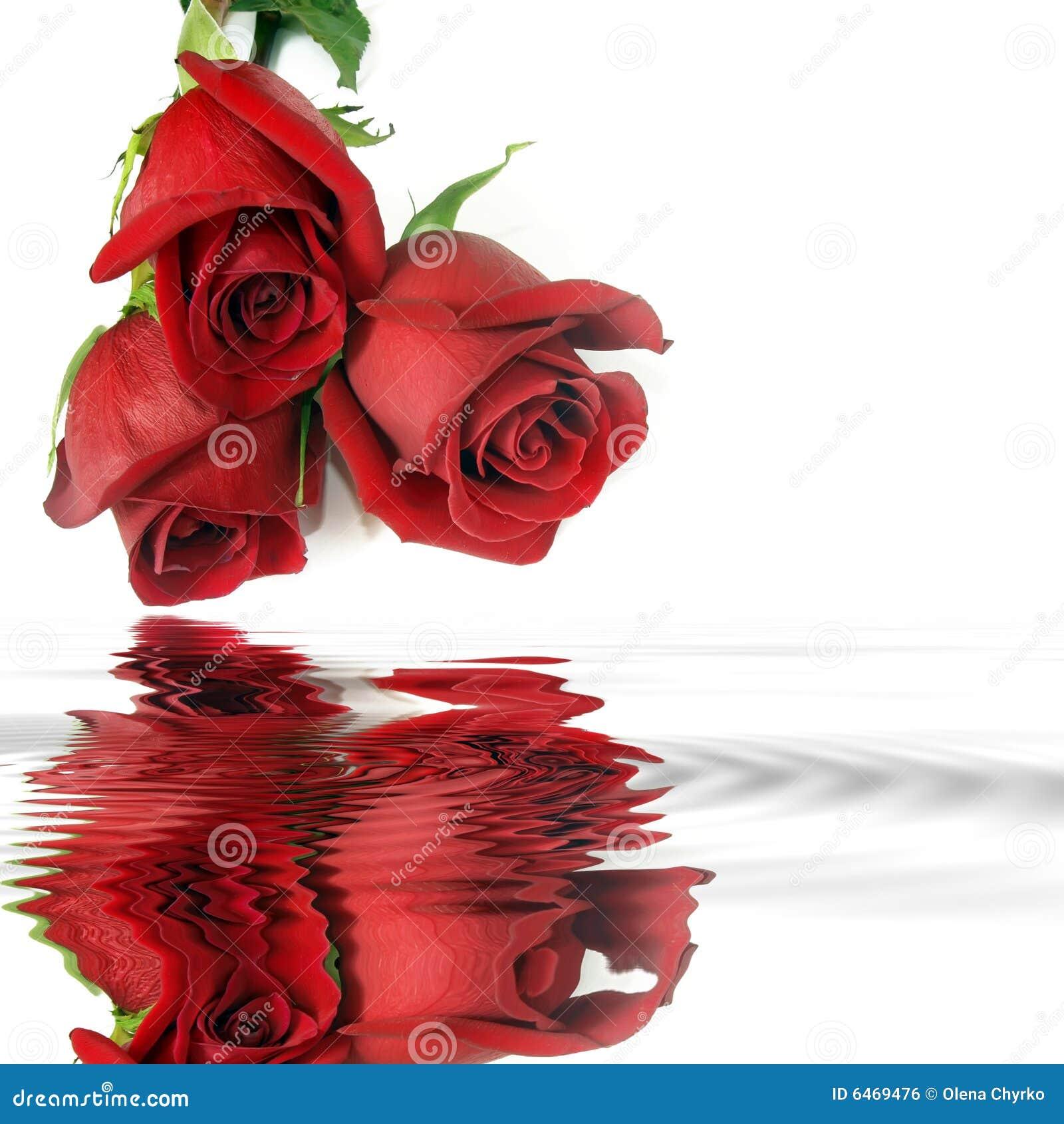 Reflexión roja de las rosas en agua