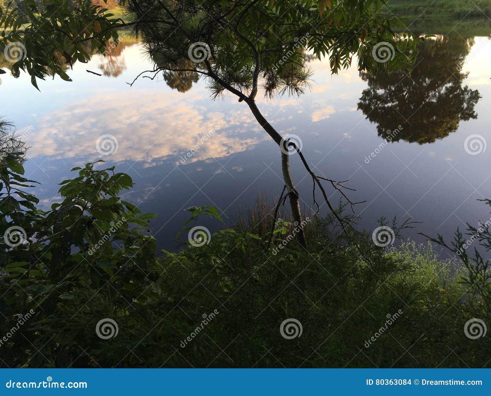 Reflexion av naturen