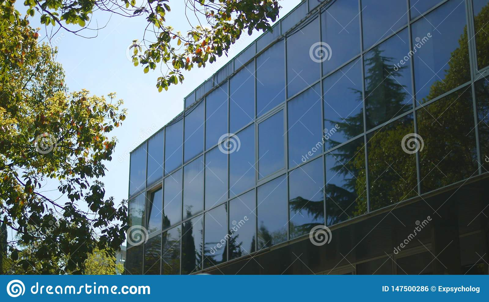 Reflexionen av tr?d i f?nstren av ett modernt h?ghus med en exponeringsglasfasad som st?r n?ra, parkerar