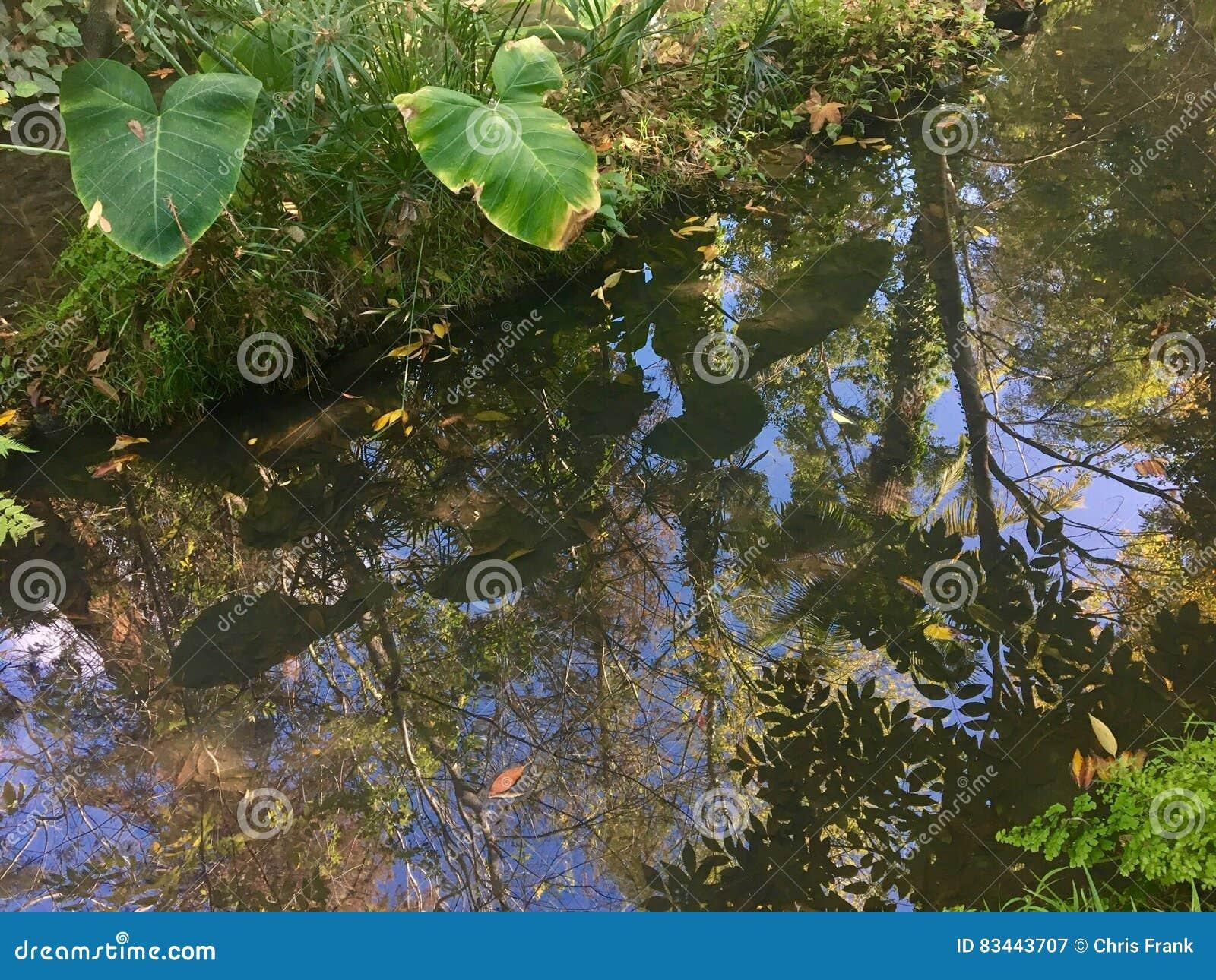 Reflexiones de la selva tropical en una corriente