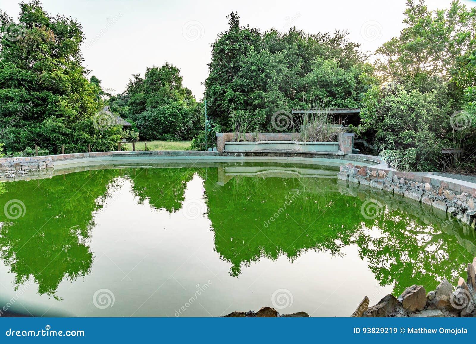 Estanques peces affordable consejos para un buen de tu - Estanque jardin leroy merlin ...