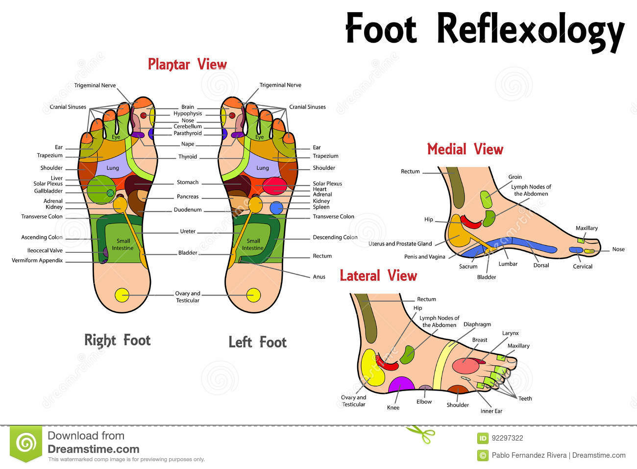 Reflexology Cartoons, Illustrations & Vector Stock Images ...